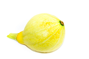 コリンキーカボチャ(黄色は生食用)の写真素材 [FYI01560472]