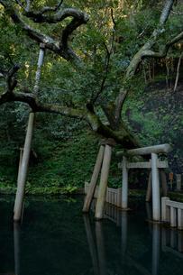 鹿島神宮の森の写真素材 [FYI01560493]