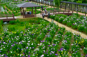 潮来あやめ祭り会場と花見客の写真素材 [FYI01560540]