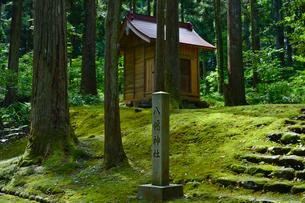 北陸の苔寺と呼ばれる平泉寺白山神社の写真素材 [FYI01560579]