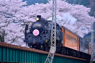 大井川鉄道の蒸気機関車とサクラ(バラ科)の写真素材 [FYI01560594]