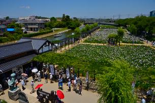 潮来あやめ祭り会場の写真素材 [FYI01560955]