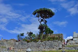 マチュピチュ遺跡のミニ植物園の写真素材 [FYI01560968]