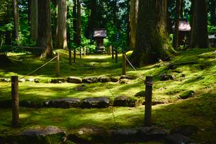 北陸の苔寺と呼ばれる平泉寺白山神社の写真素材 [FYI01561017]