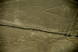 地上絵のクモの写真素材 [FYI01561059]