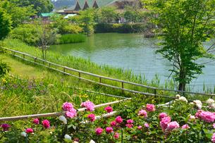茨城県フラワーパークの水辺の写真素材 [FYI01561187]