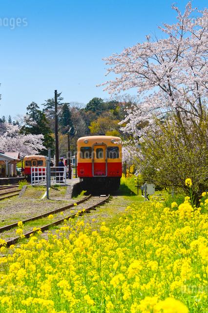 小湊鉄道里見駅付近を走る電車の写真素材 [FYI01561250]