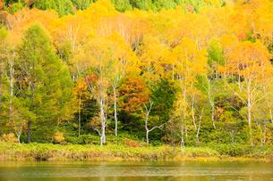 木戸池と森の写真素材 [FYI01561279]