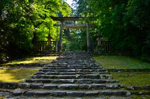 北陸の苔寺と呼ばれる平泉寺白山神社の写真素材 [FYI01561307]