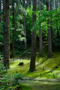 北陸の苔寺と呼ばれる平泉寺白山神社の写真素材 [FYI01561432]