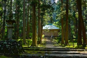 北陸の苔寺と呼ばれる平泉寺白山神社の写真素材 [FYI01561515]