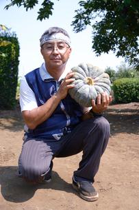 江戸東京野菜の内藤カボチャの収穫の写真素材 [FYI01561567]