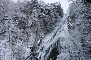 日光湯滝の雪景色の写真素材 [FYI01561635]