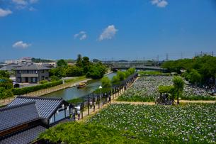 潮来あやめ祭り会場のあやめ園の写真素材 [FYI01561689]