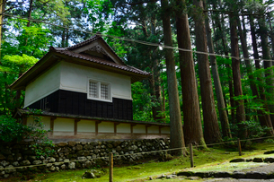 北陸の苔寺と呼ばれる平泉寺白山神社の写真素材 [FYI01561714]