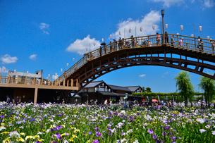 潮来あやめ祭り会場のあやめ園とあやめ橋の写真素材 [FYI01561731]