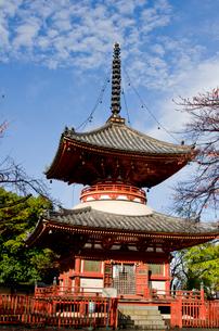 喜多院の多宝塔の写真素材 [FYI01561785]