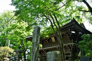 高尾山の山門の写真素材 [FYI01561802]