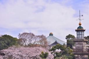 九段坂公園周辺に咲くサクラの写真素材 [FYI01561939]