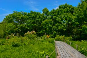 ウツギやレンゲツツジが咲く箱根湿性花園の写真素材 [FYI01561942]