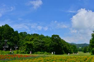 マリーゴールド(キク科)等咲くたんばらラベンダーパークの写真素材 [FYI01562333]