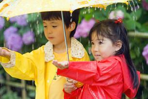 紫陽花畑で傘を持つ子供の写真素材 [FYI01562345]