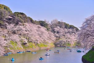千鳥ヶ淵に咲くサクラの写真素材 [FYI01562467]