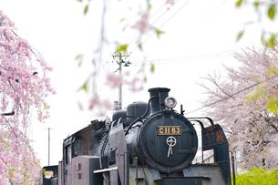 シダレ桜散歩道に展示してある機関車の写真素材 [FYI01563076]