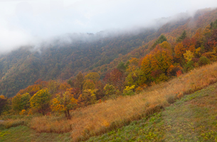 八海山中腹の紅葉の写真素材 [FYI01563089]
