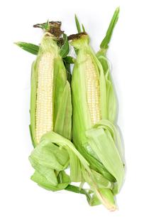 生でも食べられる白トウモロコシの写真素材 [FYI01563301]