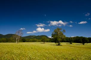 南会津たかつえのソバ畑と雲の写真素材 [FYI01563326]