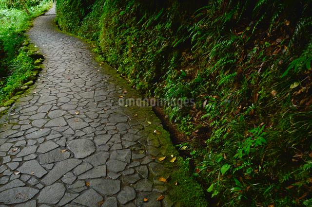 鶴仙渓遊歩道の写真素材 [FYI01563619]