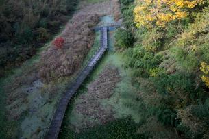 亀山湖の湿地帯の写真素材 [FYI01563710]