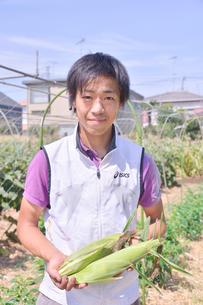 トウモロコシを収穫する男性の写真素材 [FYI01563747]