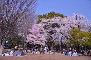 徳川吉宗が享保の改革としてサクラを植えた飛鳥山公園のサクラと花見客の写真素材 [FYI01563748]