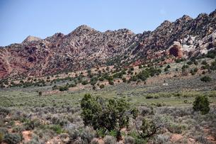 砂漠の中にある緑地の写真素材 [FYI01563952]