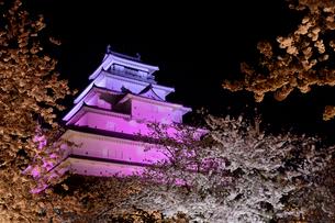 鶴ヶ城公園のお城と桜のライトアップの写真素材 [FYI01564011]