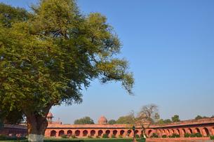 タージ・マハールの庭園の大きな木の写真素材 [FYI01564016]