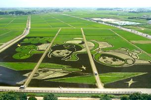 古代ハスの里公園の東側の田んぼアートの写真素材 [FYI01564138]
