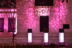 日本橋桜フェステバルで桜色にライトアップされたビル街の写真素材 [FYI01564194]