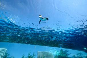 池袋サンシャインの泳ぐペンギンの写真素材 [FYI01564229]