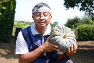 江戸東京野菜の内藤カボチャの収穫の写真素材 [FYI01564338]