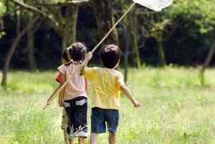 虫取りをする子供の写真素材 [FYI01564444]