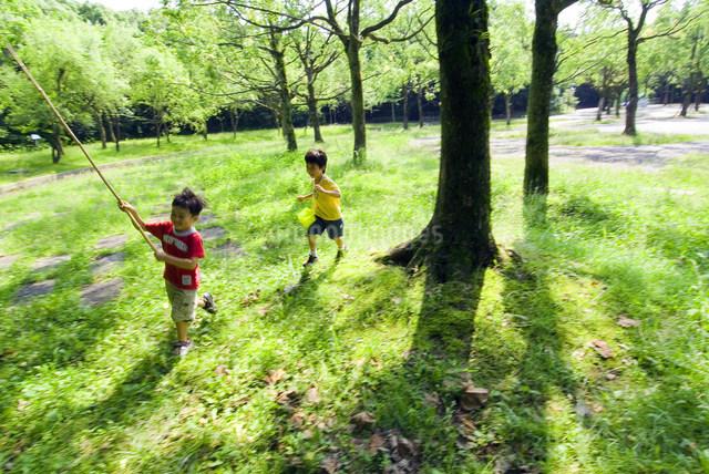 虫取りをする子供の写真素材 [FYI01565168]