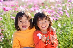 コスモス畑の女の子の写真素材 [FYI01566008]