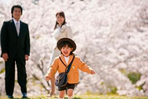 桜の前で走る男の子の写真素材 [FYI01566028]