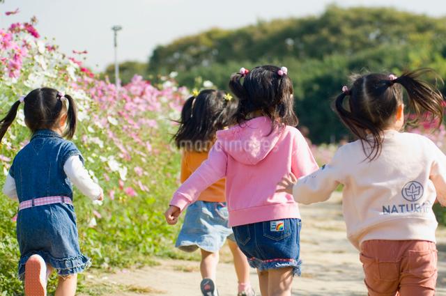 お花畑で遊ぶ少女達の写真素材 [FYI01566394]