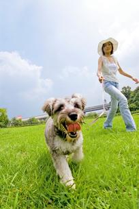 公園を散歩中の子犬の写真素材 [FYI01566496]