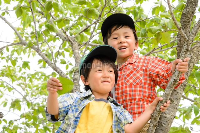 公園の木に登る男の子の写真素材 [FYI01566880]