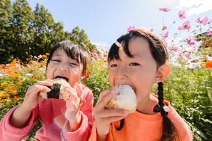 コスモス畑でおにぎりを食べる子どもの写真素材 [FYI01567038]
